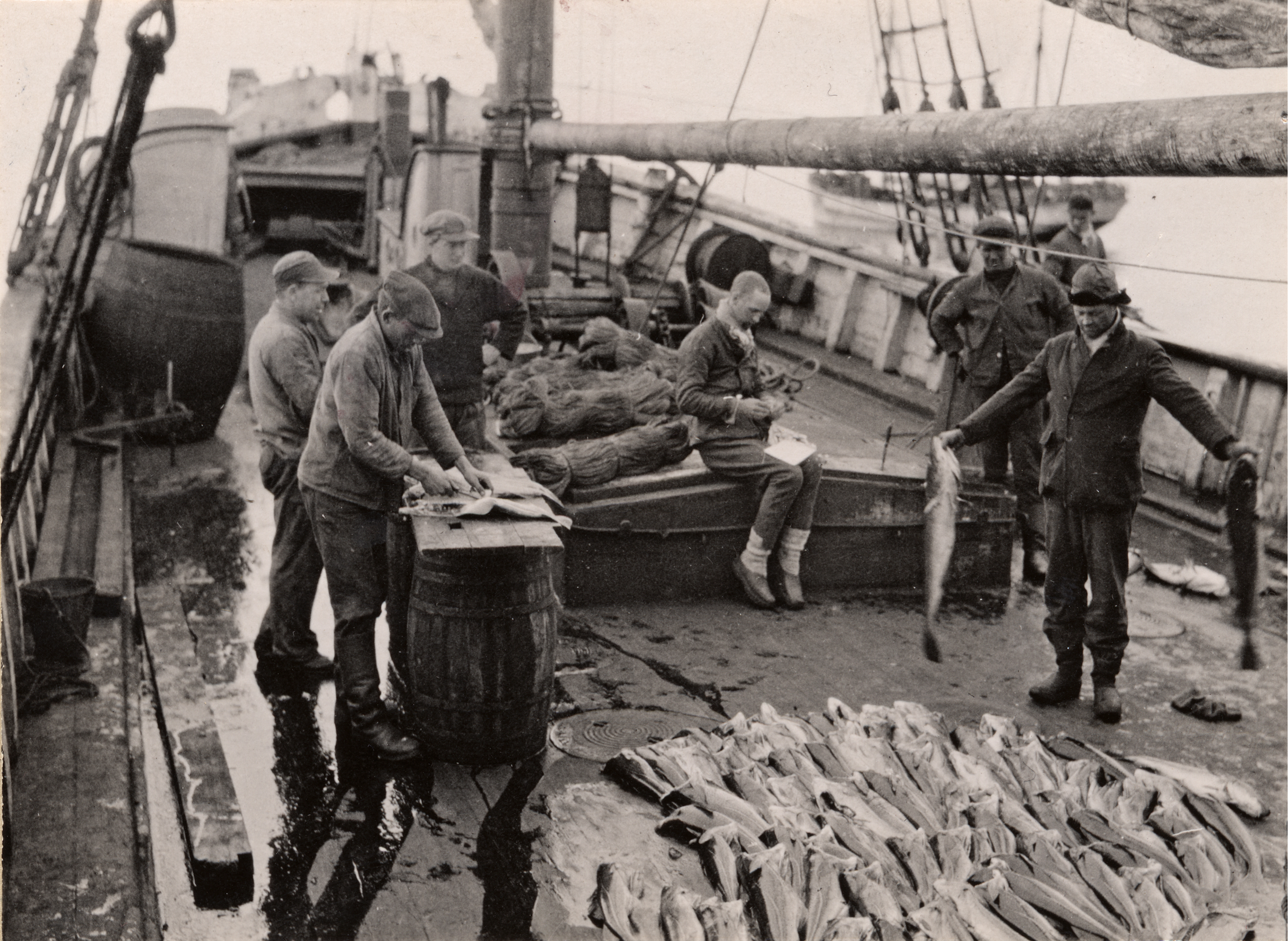 Cod fishery on-board S/S Øst in 1929