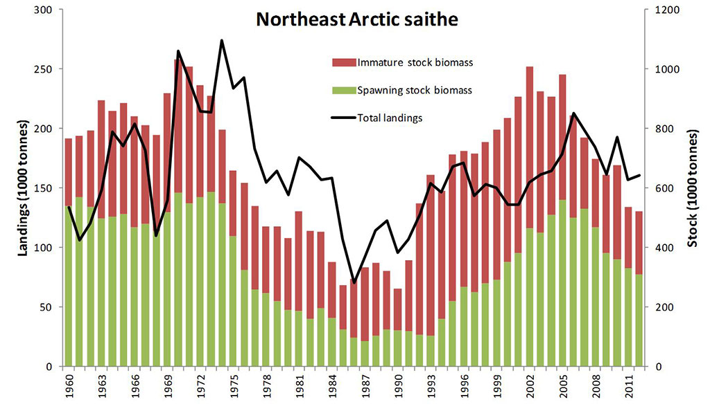Figure 4.3.53. Northeast Arctic saithe, development of spawning stock biomass (green bars), immature stock biomass (age 3 and older, red bars) and landings (black curve).
