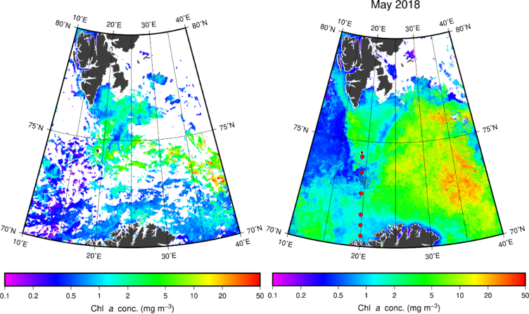Figure 3.2.1. Left: Mean surface chlorophyll concentration from MODIS satellite imagery for 21-26 May 2018 with samples taken along the Fugløya-Bjørnøya transect. Right: Mean surface chlorophyll concentration for the whole of May. Red dots show survey sampling locations along the transect, and white regions indicate missing satellite data.
