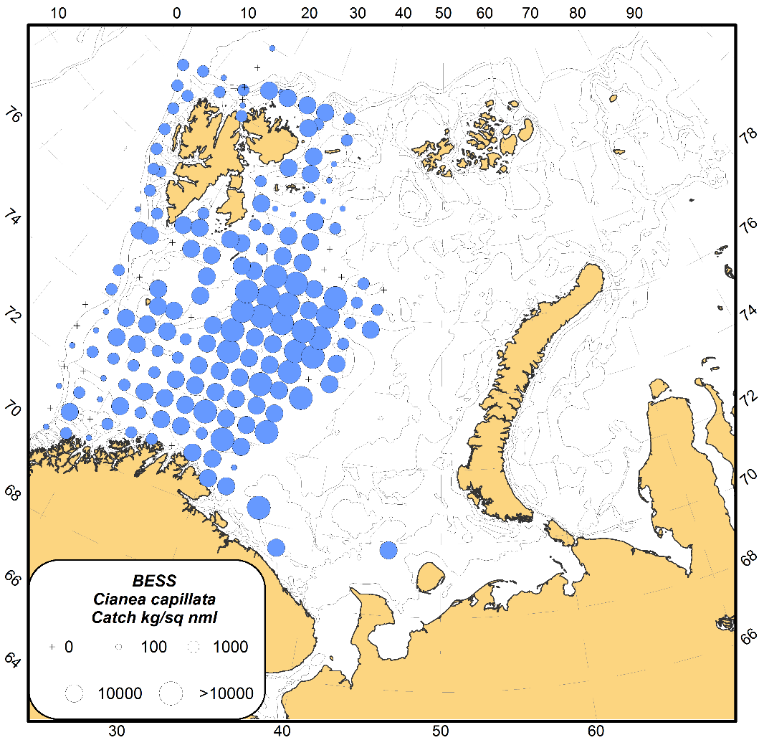 Figure 3.3.16. Distribution of jellyfish, mainly Cyanea capillata, catches (wet weight; kg per sq nmi) in the Barents Sea, during August-October 2017. Catches presented for both day and night from standard pelagic trawl stations at 0–60 m depth.