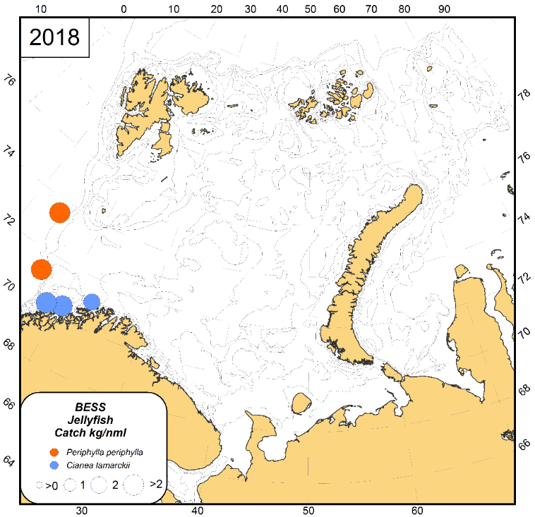 Figure 3.3.17. Jellyfish catches (wet weight; kg per sq nmi) of Cyanea lamarckii and Periphylla periphylla in the Barents Sea during August-October 2018. Catches are presented for both day and night from standard pelagic trawl stations in the upper 0–60 m layer.