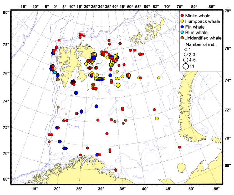 Figure 3.8.1.2. Distribution of baleen whales in August–October 2018.