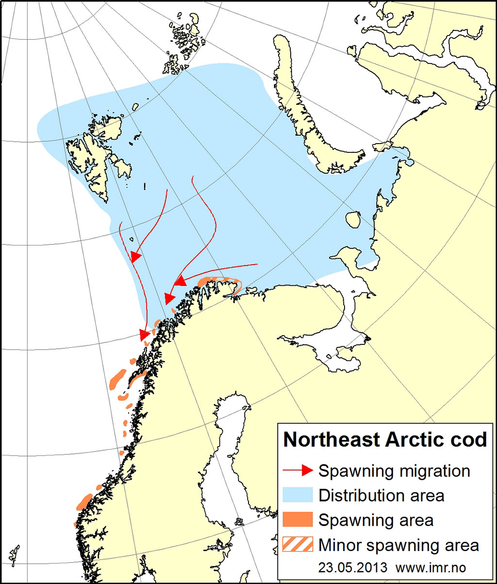 Figure 2.4.13. Distribution area for Northeast Arctic cod.