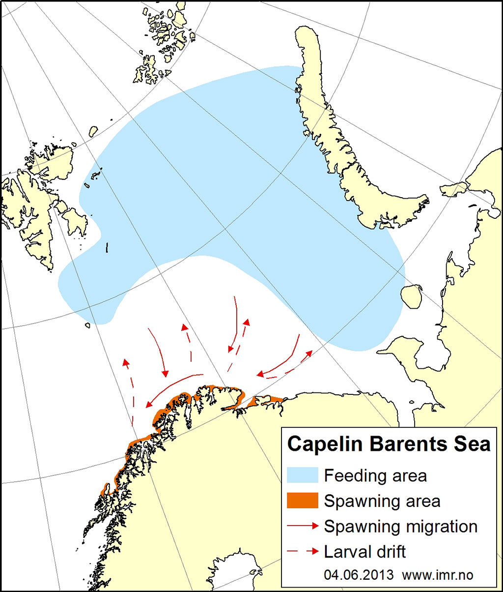 Figure 2.4.17. Distribution area for Barents Sea capelin.