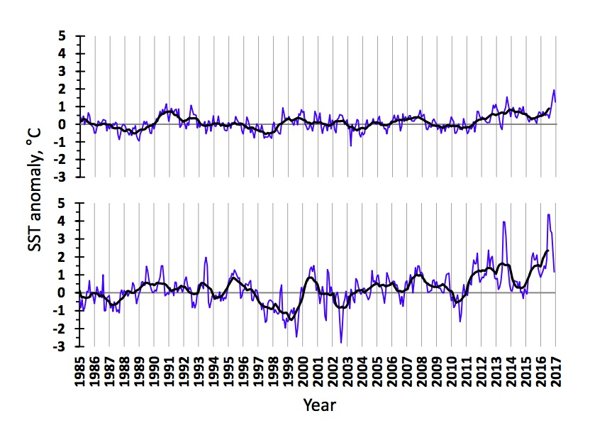 Figure 3.1.9. Sea surface temperature anomalies in the western (upper) and eastern (lower) Barents Sea in 1985–2016. The blue line shows monthly values, the black one – 11-month running means.