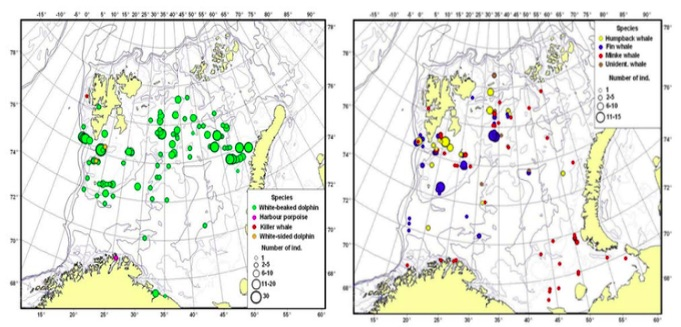Figure 3.8.1 Distribution of toothed whales (a) and baleen whales (b) observed in August-September 2016.