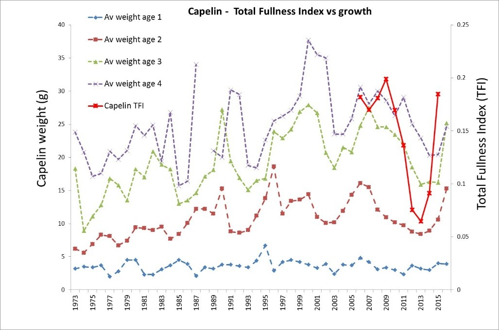 Figure 4.1.2 Growth (weight at age from ecosystem survey) and stomach fullness (TFI) of capelin in 1973–2016.