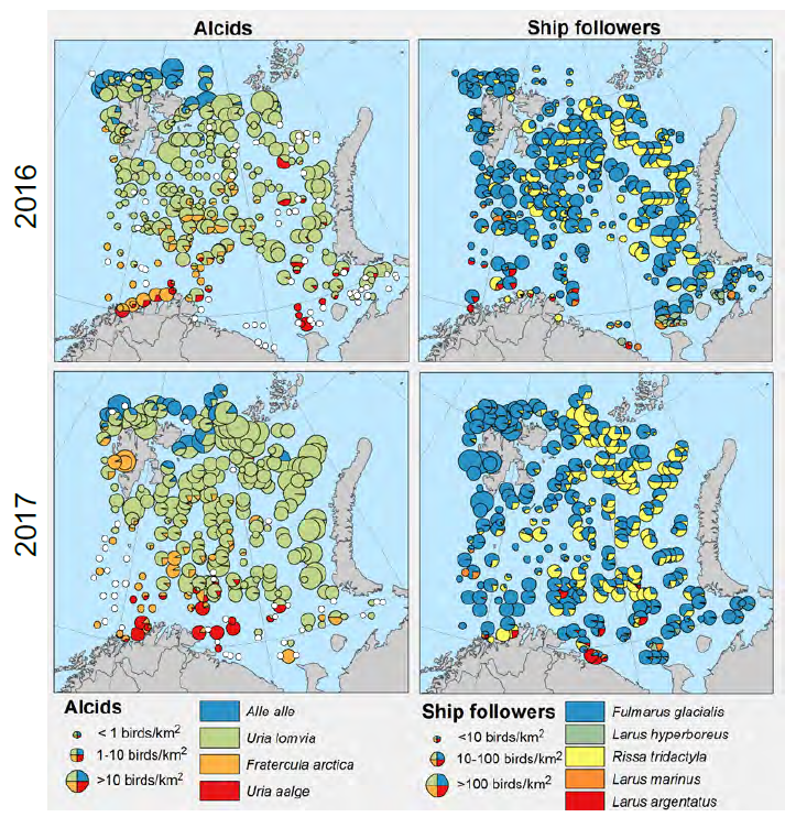 Figure 3.8.2.3. Density of seabirds during the Barents Sea ecosystem surveys in 2016 (top) and 2017 (bottom). Left panel is the distribution of auks (little auk, Bünnich's guillemot, puf-fin and common guillemot). Right panel is the distribution of shipfollowers (fulmar, glaucous gull. Kittiwake, black-backed gull and herring gull).