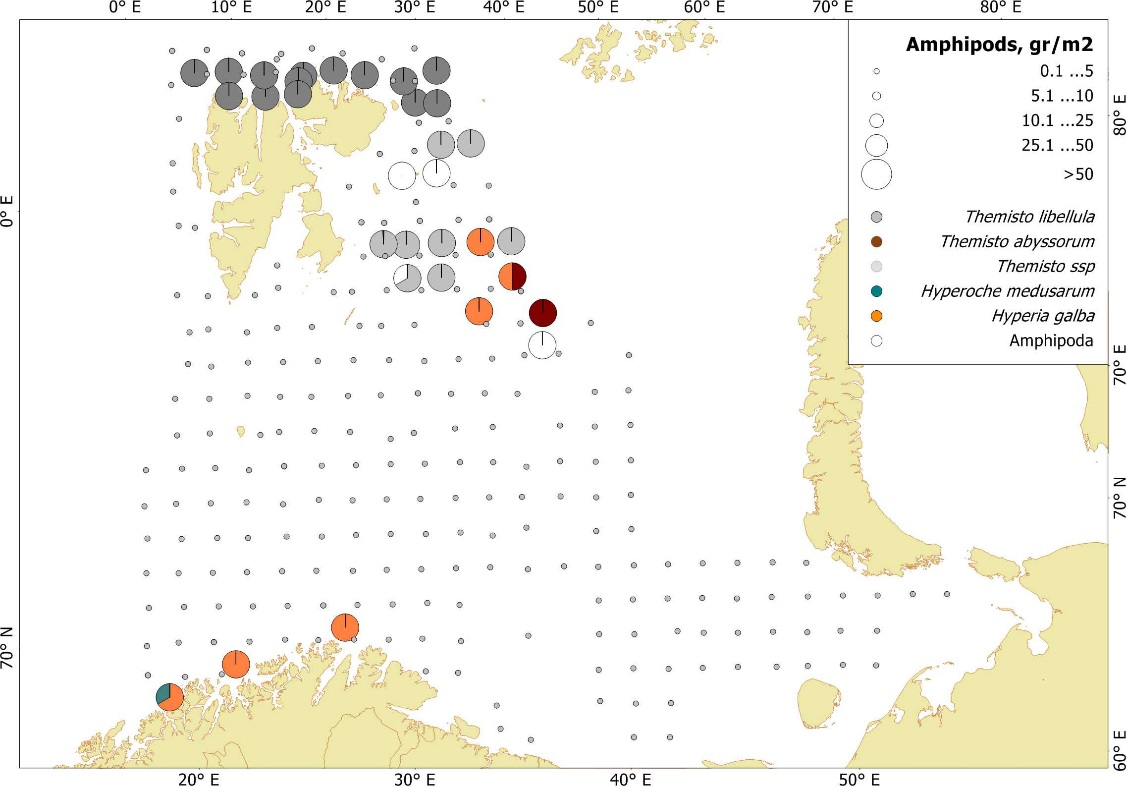 Figure 3.3.13. Amphipods species distribution, based on pelagic trawl stations covering the upper water layers (0-60 m), in the Barents Sea in August-October 2017. Figure by E. Eriksen