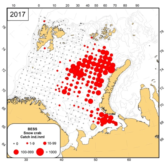 Figure 3.4.10. Distribution of the snow crab (<em>Chionoecetes opilio</em>) in the Barents Sea in August-October 2017 as observed by the Ecosystem Survey.