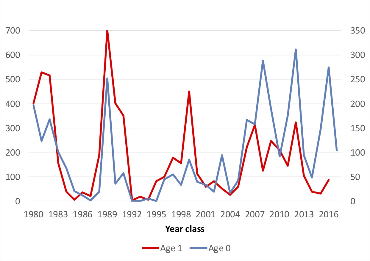 Fig. 4.3.1. Fluctuation of capelin at age 0 (blue line) and 1 (red line) for the cohorts 1980-2017.