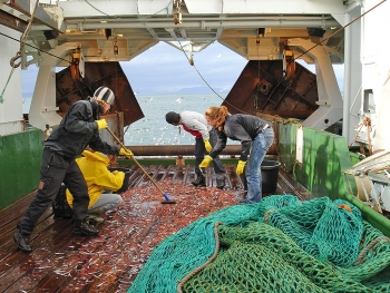 Fishing activity in the Barents Sea (Photo: NPI)