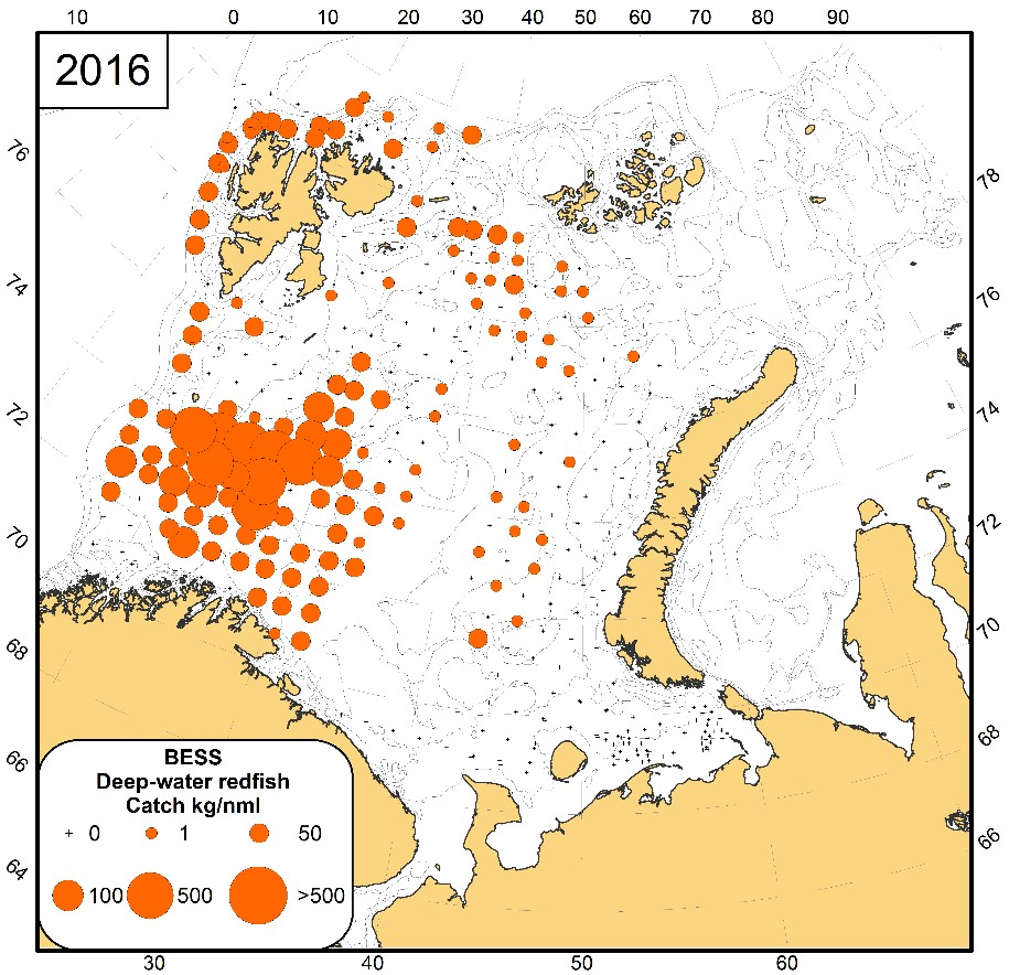 Figure 3.6.15. Geographical distribution of deep-water redfish during the ecosystem survey in 2016.