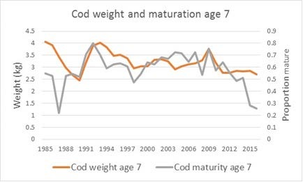 Figure 4.2.9. Cod maturity and weight at age 7 (ICES 2016c).