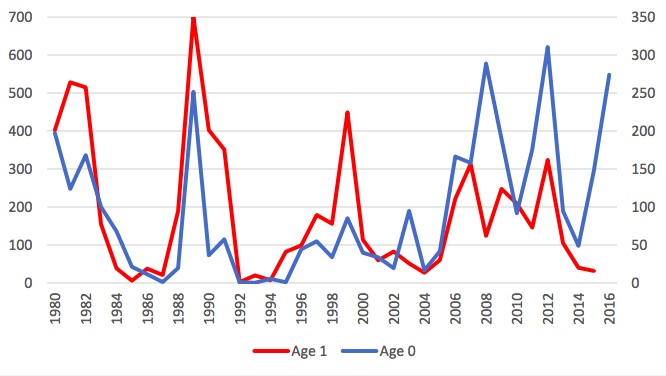 Figure 4.3.1. Fluctuation of capelin at age 0 (blue line) and 1 (red line) for the cohorts 1980–2016.
