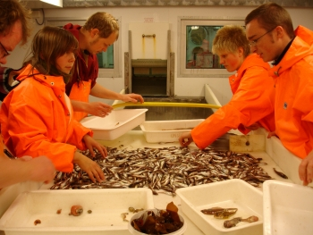Sorting trawl catch. Photo: Norwegian Polar Institute