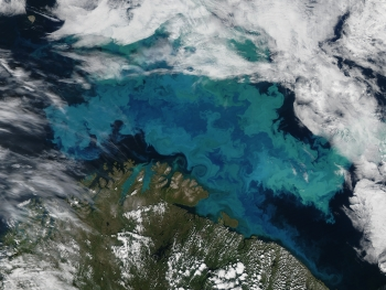 The Barents Sea Abloom